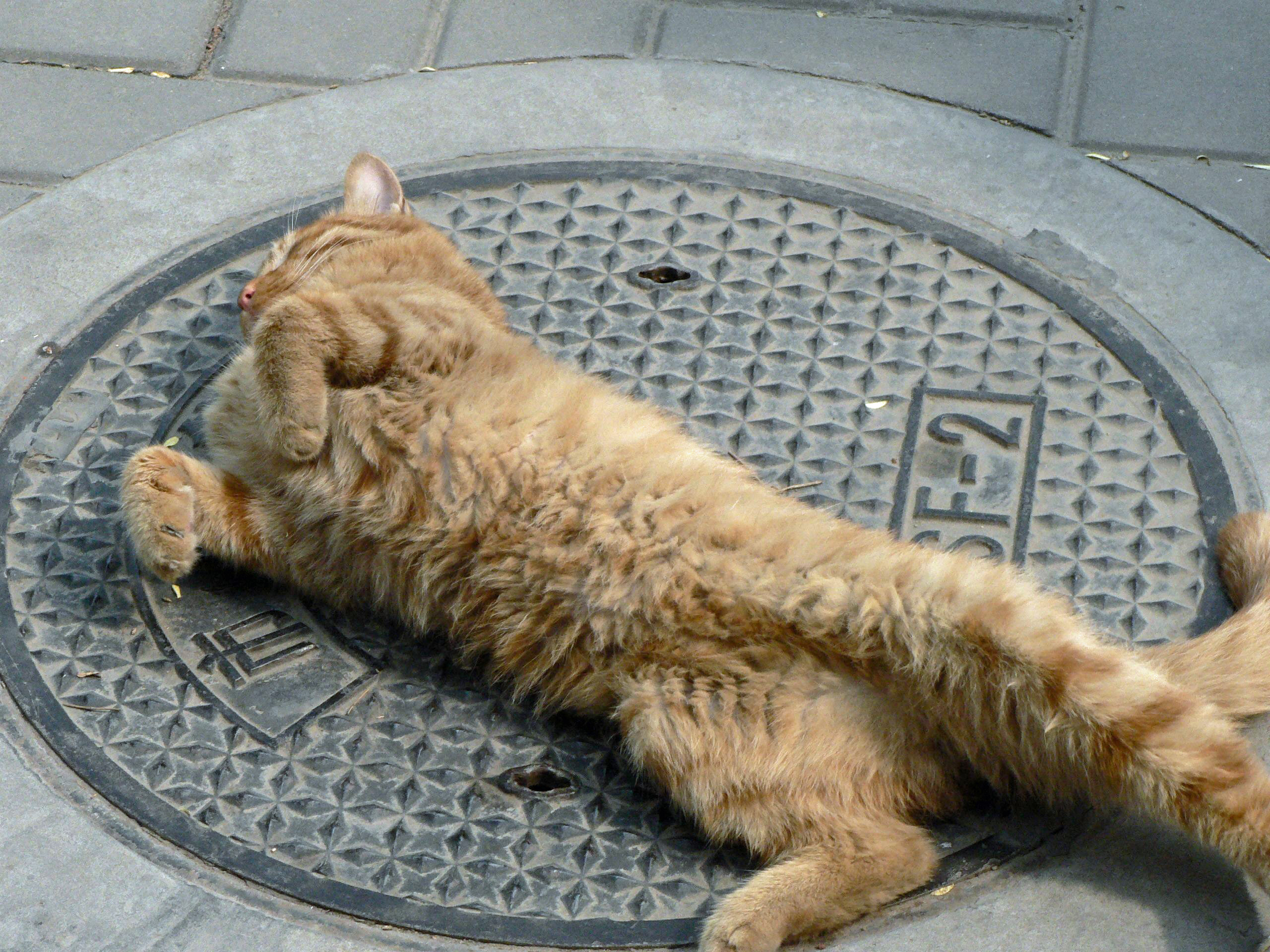 Orange cat relaxing on manhole cover