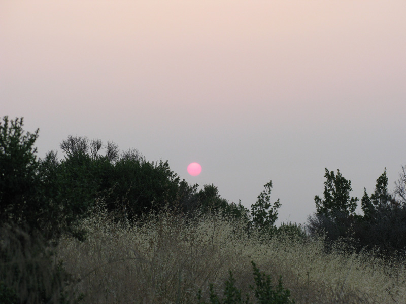 red sun in smoky sky