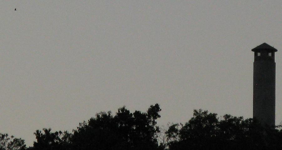Lesser nighthawk at dusk flying behind Irvine Regional Park