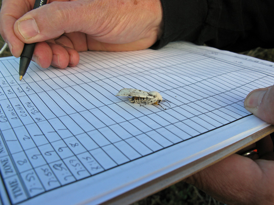 White moth on clipboard