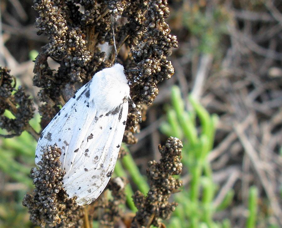 Perched moth