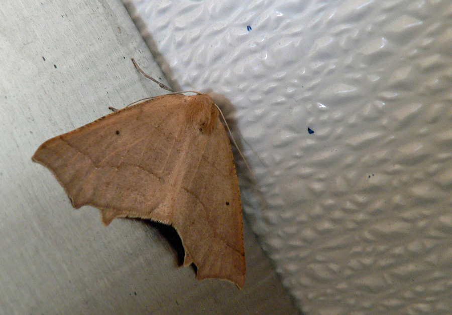 Moth perched on ceiling of men's room