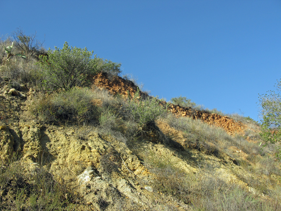 Hillside in Crow Canyon at Starr Ranch