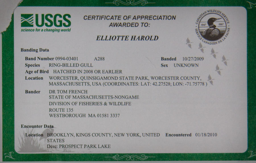 USGS Certificate of Appreciation. Awarded to. Elliotte Harold. BANDING DATA: BAND NUMBER: 0974-05321 A99. SPECIES: RING-BILLED GULL. Banded 11/05/2008 Sex Unknown